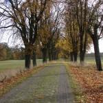 Herbstchaussee